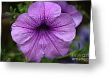 Petunia Greeting Card