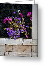 Petunias Through Wrought Iron Window Greeting Card