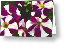 Petunias With A Flare Greeting Card