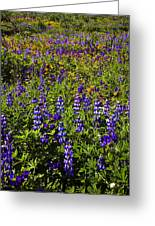 Phacelia Poppies Lupines Greeting Card
