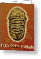 Phacops Rana Crassituberculata  Greeting Card
