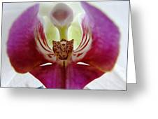 Phalaenopsis Orchid Detail Greeting Card