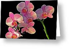 Phalaenopsis Orchid Greeting Card