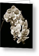 Phalaenopsis Greeting Card