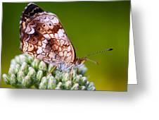 Phaon Crescent Greeting Card