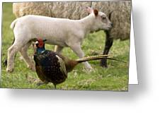 Pheasant And Lamb Greeting Card