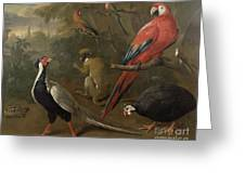Pheasant Macaw Monkey Parrots And Tortoise  Greeting Card