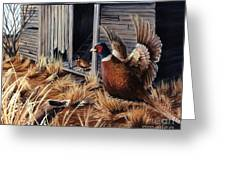 Pheasant Open House Greeting Card