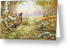 Pheasants In Woodland Greeting Card