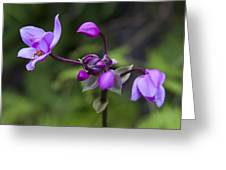Philippine Ground Orchid Greeting Card