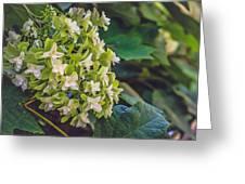 Philipsburg Manor - White Blossom Greeting Card