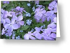 Phlox Divaricata Chattahoochee And Myosotis Forget-me-not Greeting Card