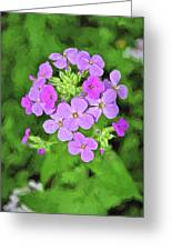 Phlox For You Greeting Card