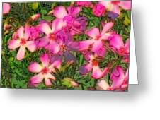 Phlox Fun - Pink Glow Greeting Card