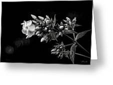 Phlox In Black And White Greeting Card