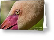 Phoenicopterus Roseus - Macro Greeting Card by Svetlana Ledneva-Schukina