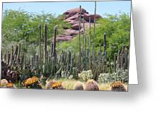 Phoenix Botanical Garden Greeting Card by Carol Groenen
