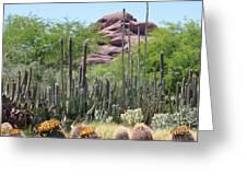 Phoenix Botanical Garden Greeting Card