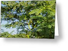 Photo Of Indian Tree Greeting Card