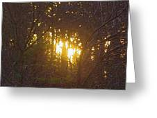 Photo Winter Solstice Dawn Greeting Card