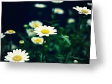 Photo5 Greeting Card