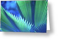 Photograph Of A Royal Palm In Blue Greeting Card