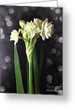 Photograph Of Narcissus Erlicheer A White Flower Greeting Card