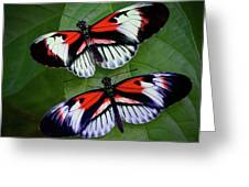 Piano Key Butterfly's Greeting Card