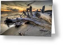 Pic Driftwood Greeting Card