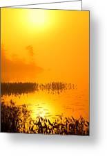 Pickerel Sunrise Greeting Card