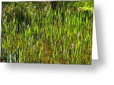 Pickerelweed Greeting Card