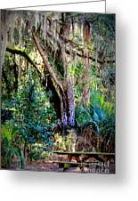 Picnic Time In Florida Greeting Card