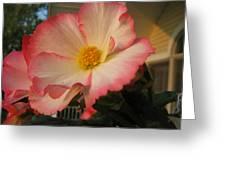 Picotee Begonia Greeting Card