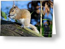 Picture Perfect Squirrel Greeting Card