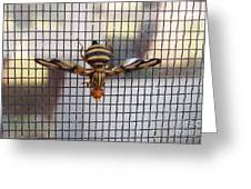 Picture Winged Bee Fly On Screen     Spring      Indiana Greeting Card