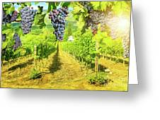 Picturesque Vineyard At Sunset Greeting Card