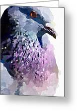 Pidgeon Greeting Card
