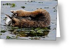 Pied-billed Grebe Spreading Oil Greeting Card