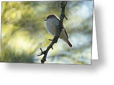 Pied Flycatcher 1 Greeting Card
