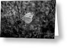 Pieris Rapae Greeting Card