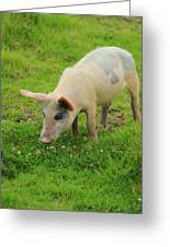 Pig In Wildflowers Greeting Card