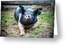 Pig Out Greeting Card