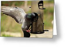 Pigeon And Feeder Wings Spread Greeting Card