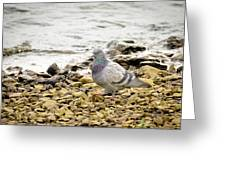 Pigeon Close To The River Greeting Card