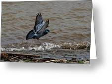 Pigeon Getting Ready To Land Greeting Card