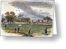 Pigeon Hunting, C1875 Greeting Card