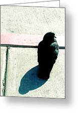 Pigeon Waits Greeting Card