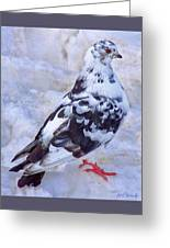 Pigeon On Ice  1 Greeting Card