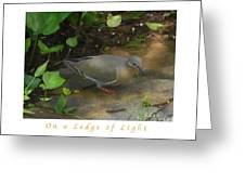 Pigeon Poster Greeting Card