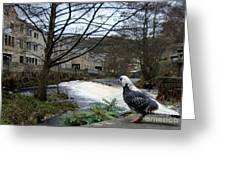 Pigeon Watch Greeting Card